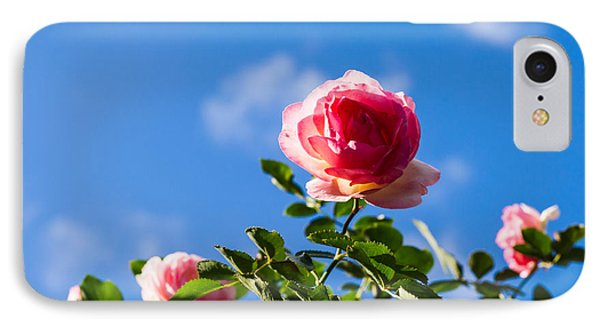 Pink Roses - Featured 3 IPhone Case by Alexander Senin