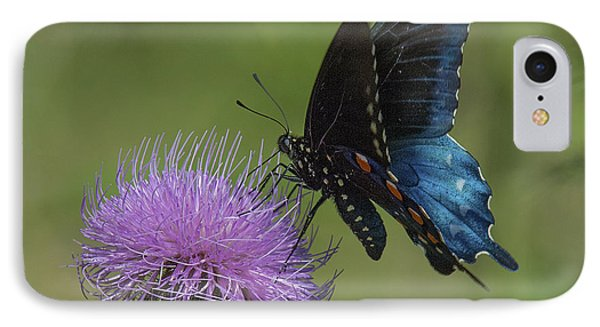 Pipevine Swallowtail Visiting Field Thistle Din158 Phone Case by Gerry Gantt