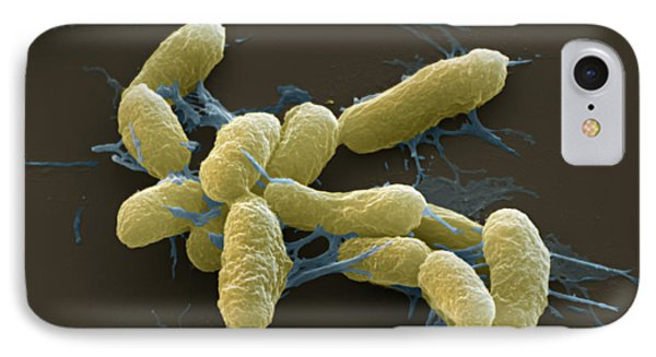 Plague Bacteria Yersinia Pestis Sem Phone Case by Eye of Science
