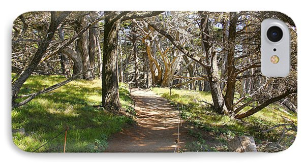 Point Lobos Cypress Path IPhone Case by Jack Schultz