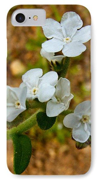 Popcorn Flower In Park Sierra-ca IPhone Case by Ruth Hager