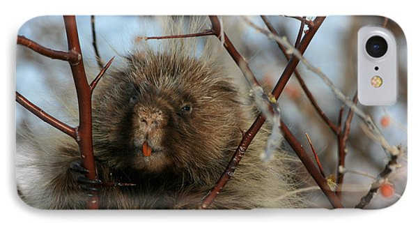 Porcupine And Berries Phone Case by Marty Fancy