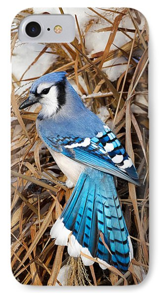 Portrait Of A Blue Jay IPhone 7 Case by Bill Wakeley