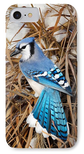 Portrait Of A Blue Jay IPhone Case by Bill Wakeley