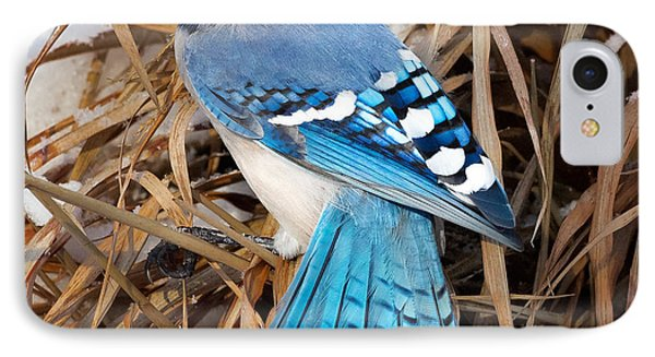 Portrait Of A Blue Jay Square IPhone 7 Case by Bill Wakeley