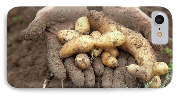 Potato Harvest IPhone Case by Jim West