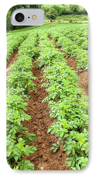 Potatoes Growing At Washingpool Farm IPhone 7 Case by Ashley Cooper