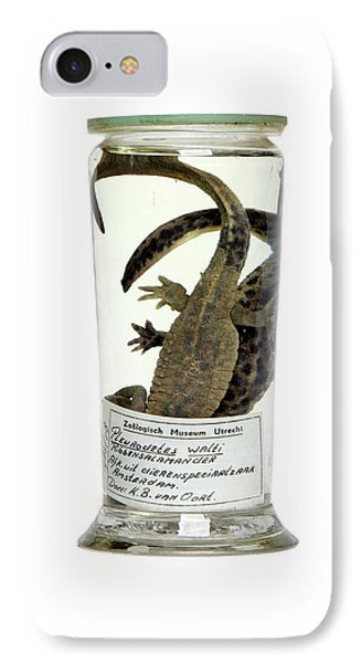 Preserved Newts IPhone 7 Case by Gregory Davies