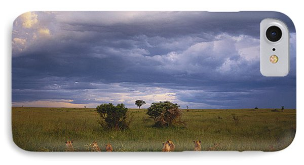 Pride Of Lions Phone Case by Art Wolfe
