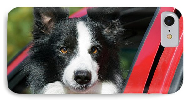 Purebred Border Collie Looking Out Red IPhone Case by Piperanne Worcester