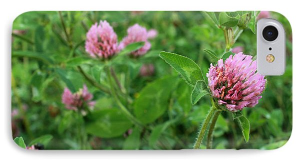 Purple Clover Wild Flower In Midwest United States Meadow IPhone Case by Adam Long