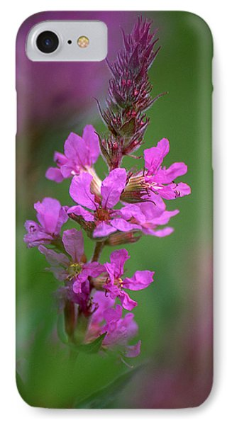 Purple Loosestrife IPhone Case by Dale Kincaid