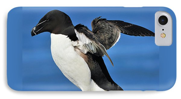 Razorbill IPhone 7 Case by Tony Beck