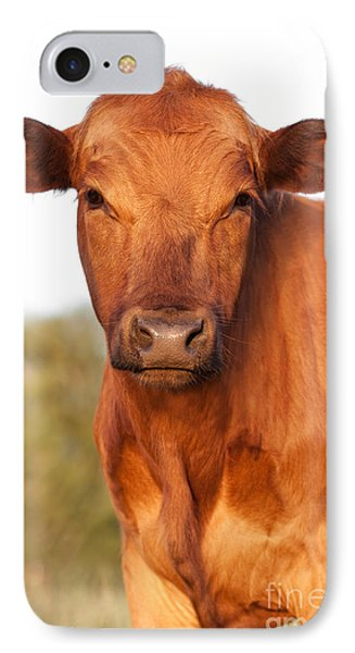 Red Angus Cow Phone Case by Cindy Singleton