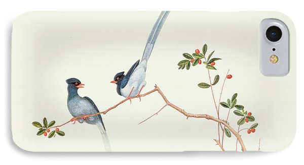 Red Billed Blue Magpies On A Branch With Red Berries IPhone 7 Case by Chinese School