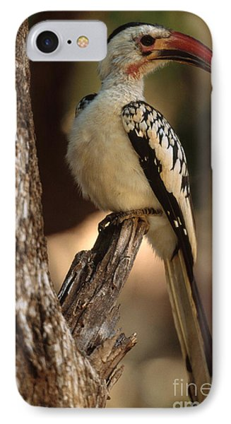 Red-billed Hornbill IPhone Case by Art Wolfe
