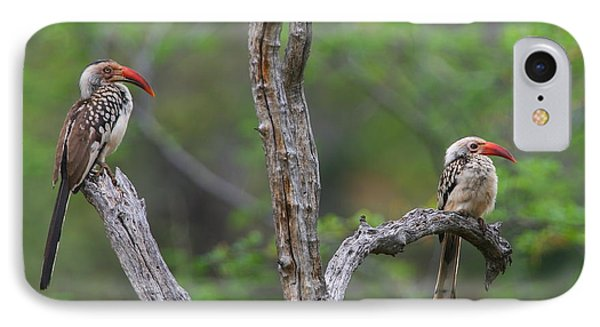 Red-billed Hornbills IPhone Case by Bruce J Robinson