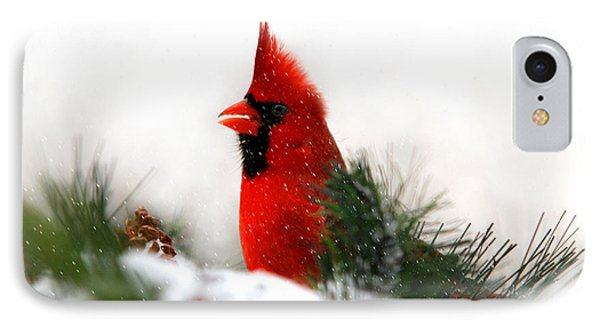 Red Cardinal IPhone 7 Case by Christina Rollo
