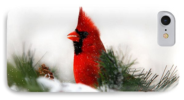 Red Cardinal IPhone Case by Christina Rollo