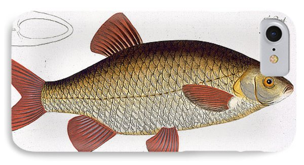 Red Carp Phone Case by Andreas Ludwig Kruger