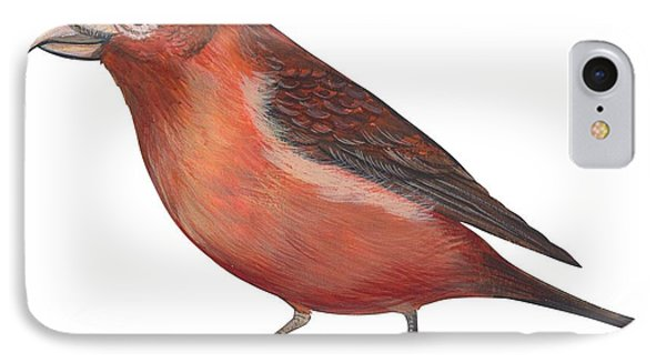 Red Crossbill IPhone Case by Anonymous