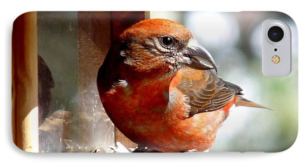 Red Crossbill IPhone Case by Marilyn Burton