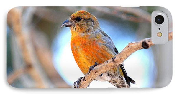 Red Crossbill On Aspen IPhone Case by Marilyn Burton