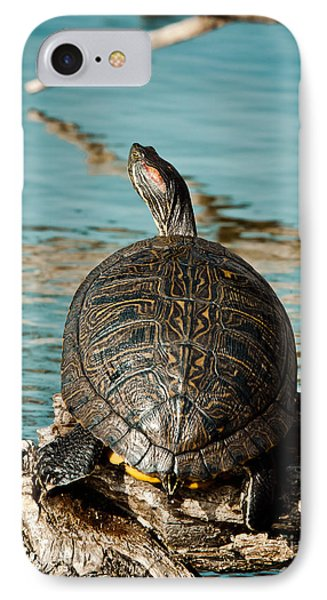 Red Eared Slider Xxl IPhone Case by Robert Frederick