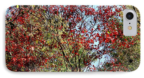 Red Fall Foliage Phone Case by Tina M Wenger