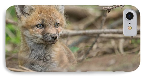 Red Fox Kit Phone Case by Everet Regal