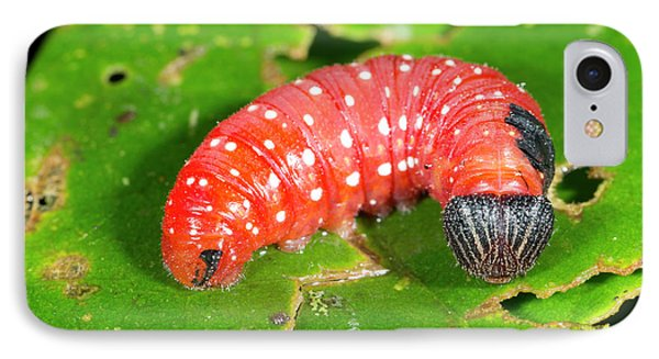 Red Lepidopteran Larva IPhone Case by Dr Morley Read
