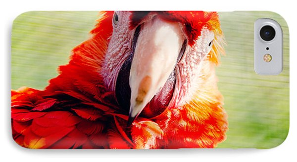 Red Macaw IPhone 7 Case by Pati Photography
