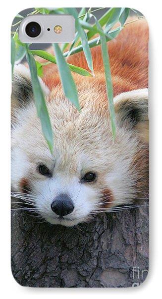 Red Panda Phone Case by Karol Livote