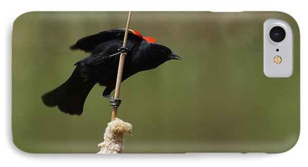 Red Winged Blackbird 3 IPhone 7 Case by Ernie Echols