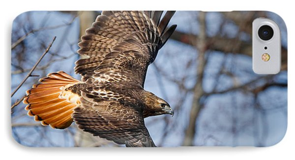 Redtail Hawk IPhone Case by Bill Wakeley