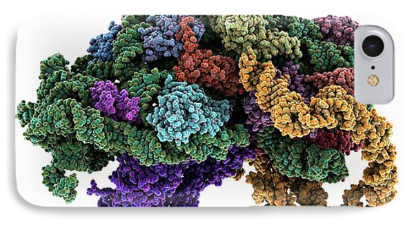 Ribosome Bound To Mrna IPhone Case by Laguna Design