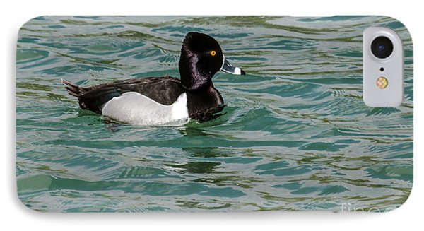 Ring-necked Duck IPhone Case by Robert Bales
