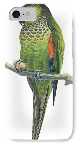 Rock Parakeet IPhone Case by Anonymous