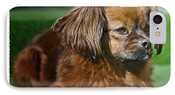 Romanian Pekinese No. 1 Phone Case by Harold Bonacquist