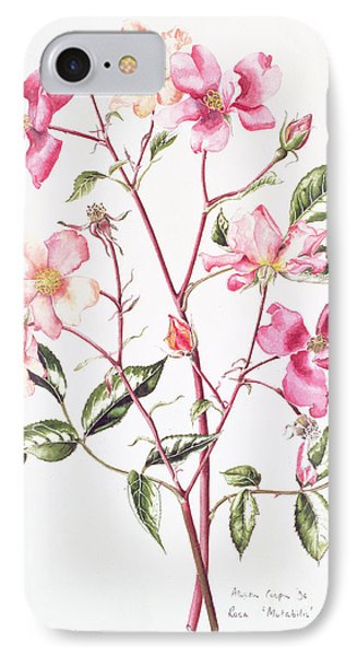 Rosa Mutabilis IPhone Case by Alison Cooper