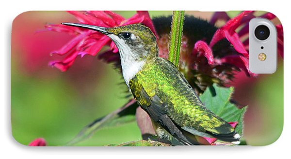 IPhone Case featuring the photograph Ruby Throated Hummingbird Female by Rodney Campbell