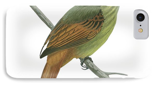 Rufous Tailed Flatbill  IPhone Case by Anonymous