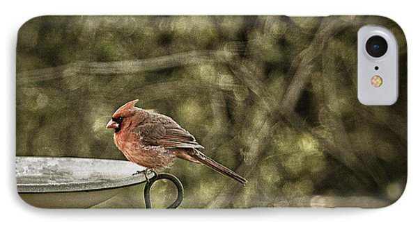 Rustic Cardinal Phone Case by Cris Hayes