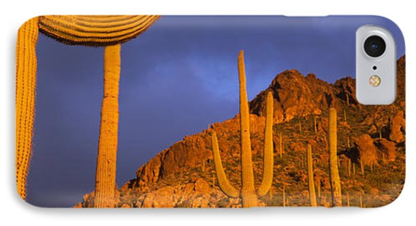 Saguaro Cactus, Tucson, Arizona, Usa IPhone Case by Panoramic Images