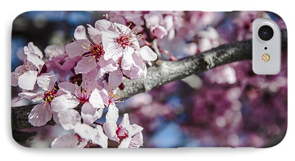 Sakura Blossoms IPhone Case by Anthony Citro
