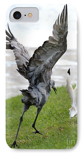 Sandhill Chasing Ibis IPhone Case by Carol Groenen