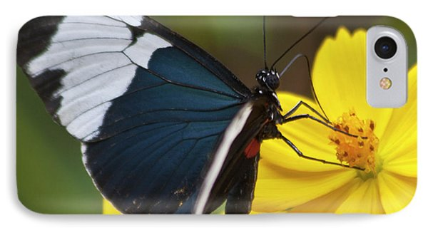 Sapho Longwing Yellow Oriented Phone Case by Heiko Koehrer-Wagner
