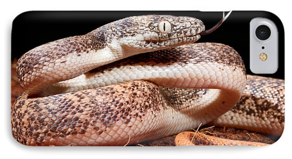 Savu Python In Defensive Posture IPhone 7 Case by David Kenny