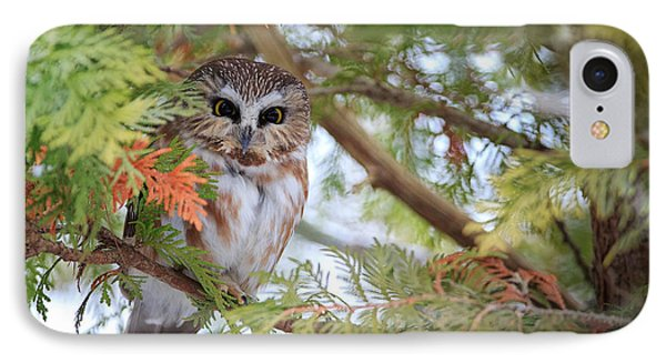 Saw-whet Owl IPhone Case by Everet Regal