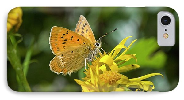 Scarce Copper Butterfly On Ragwort IPhone Case by Bob Gibbons